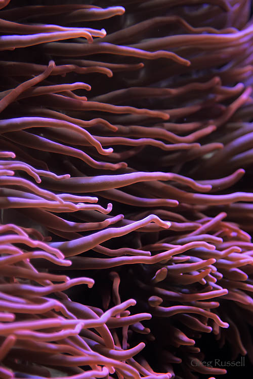Sea Anenome Abstract