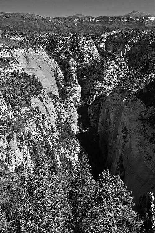 Mystery canyon in black and white, Zion National Park, Utah