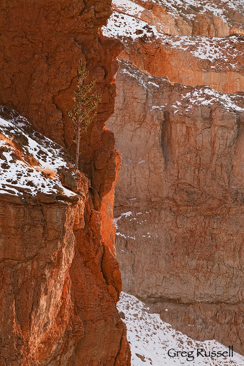 Late Afternoon in Bryce Canyon National Park, Utah