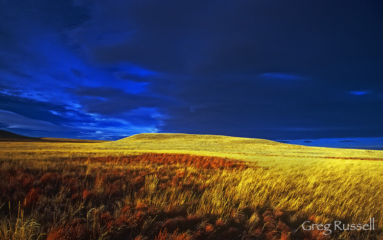 The prairie ecosystem near Cheyenne, Wyoming