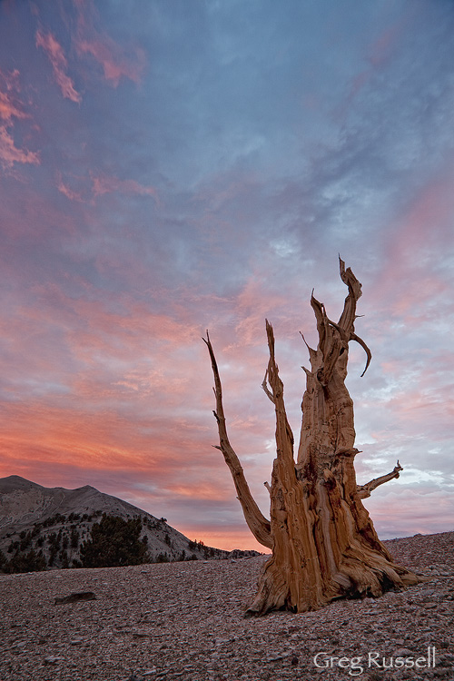 Sunset in the Patriarch Grove of Bristlecone Pines