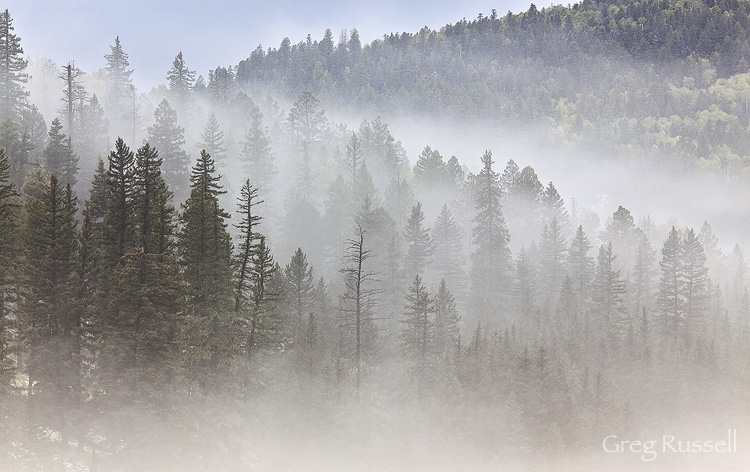 Fog drifts through trees