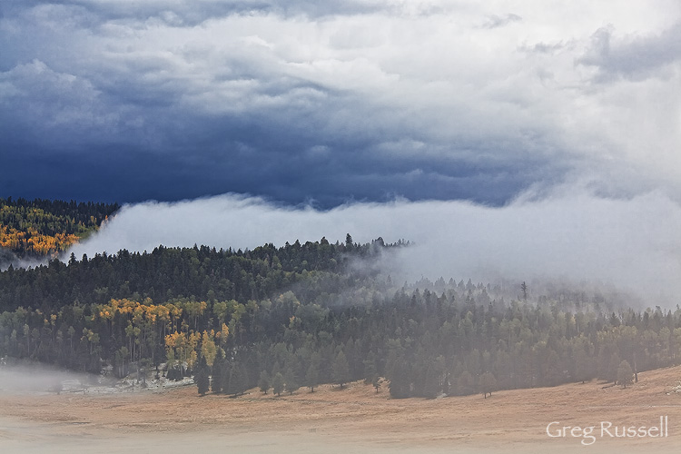 Fog and trees, Valles Caldera National Preserve