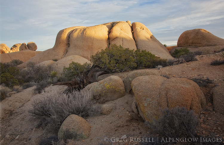 photo of rocks and bushes as the sun sets in joshua tree national park
