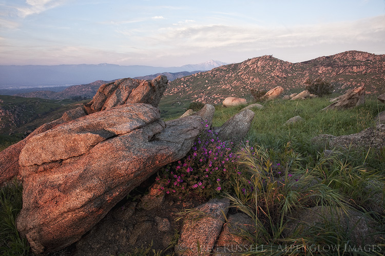 photo of wildflowers and green in hills in Box Springs Mountains Reserve, Riverside County California