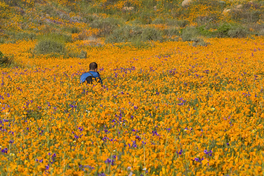 photograph of a photographer kneeling in a field of wildflowers during the 2008 wildflower season