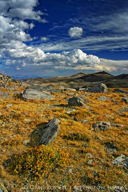 photo of yellow grasses on a high altitude plateau with peaks in the distance and white cumulus clouds in the blue sky above