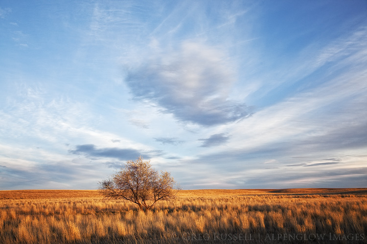 Photo of a lone tree on the prairie at sunset near Hawk Springs Wyoming