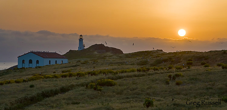 morning on Anacapa Island, Channel Islands National Park, California