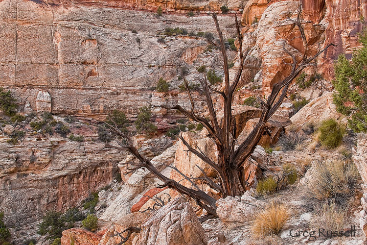Canyon and cedar snag in the grand staircase escalante national monument, utah