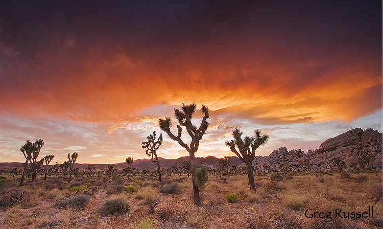 Fiery, dramatic sunset in joshua tree national park, california