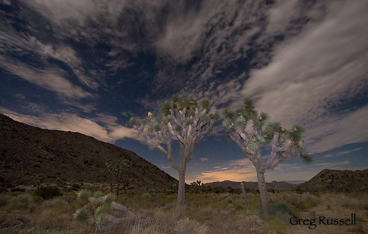 night scene in joshua tree national park, california