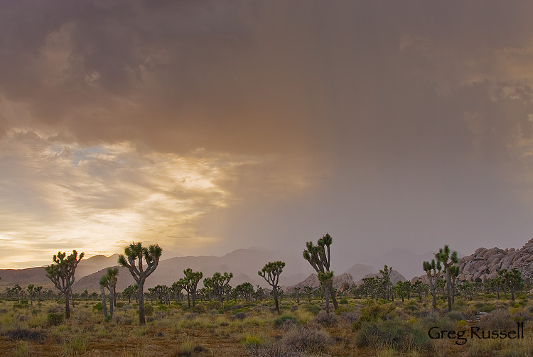 A thunderstorm in Joshua Tree National Park, California